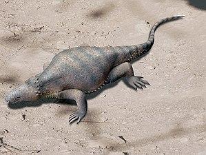 Eunotosaurus - Restoration of Eunotosaurus africanus