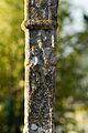 Fût de la croix de cimetière (Saint-Erblon, Ille-et-Vilaine, France).jpg
