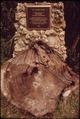 FAHKAHATCHEE STRAND OF CYPRESS IN BIG CYPRESS BEND, A NATIONAL HISTORIC SITE - NARA - 544628.tif