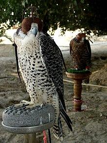 Falconry - Wikipedia bahasa Indonesia, ensiklopedia bebas