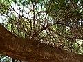 Fale - Giardini Botanici Hanbury in Ventimiglia - 480.jpg