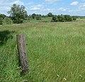 Farmland alongside the A5199 Welford Road - geograph.org.uk - 864284.jpg
