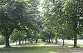 Farnham Park - geograph.org.uk - 20064.jpg