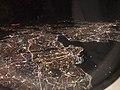Fatih from plane by night.jpg