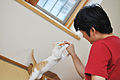 Feeding a cat 003.jpg