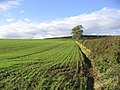 Field boundary - geograph.org.uk - 264201.jpg