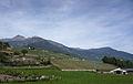 Field in Italy.jpg