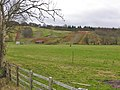 Fields west of Strata Florida - geograph.org.uk - 645857.jpg
