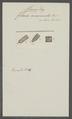Filaria acuminata - - Print - Iconographia Zoologica - Special Collections University of Amsterdam - UBAINV0274 104 10 0010.tif