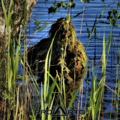 Finnish Sniper using a ProApto Ghillie during training operations.png