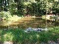 Fischteiche nördlich von Wilthen (3).jpg