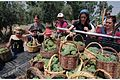 Flickr - Government Press Office (GPO) - Grape Harvest.jpg