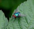 Flickr - law keven - Feeling blue.....jpg