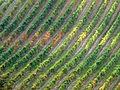 Flickr - lo.tangelini - Sinfonia de la uva IV.jpg