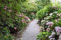 Flickr - ronsaunders47 - FLOWERY PATH IN VENTNOR..jpg