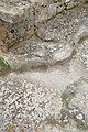 Floor in ancient Utica 10.jpg