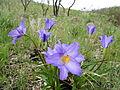 Flor do Cerrado - Canela de Ema.JPG