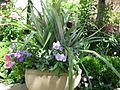 Flower Planter.jpg