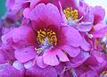 Flowers (129).jpg