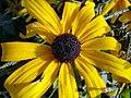 Flowers of Iran by qom city 14.jpg