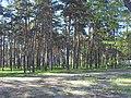 Fokinskiy rayon, Bryansk, Bryanskaya oblast', Russia - panoramio (104).jpg