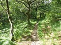 Footpath, below Woodbury Castle - geograph.org.uk - 1364724.jpg