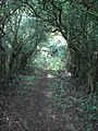 Footpath Bower - geograph.org.uk - 514818.jpg
