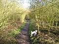 Footpath in Moira, Leicestershire.jpg