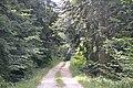 Forêt domaniale des Fanges (2).jpg