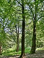 Forest - panoramio - paulnasca (72).jpg