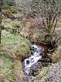 Forest stream - geograph.org.uk - 322224.jpg