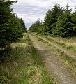 Forest track - geograph.org.uk - 1317183.jpg