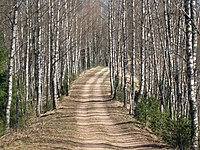 Forest trail in Põhja-Kõrvemaa.jpg