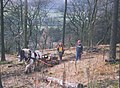 Forestry by horse - geograph.org.uk - 199155.jpg