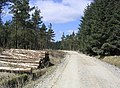 Forestry road and logs - geograph.org.uk - 394056.jpg