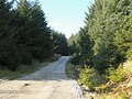 Forestry road in Coat Weggs plantation - geograph.org.uk - 699713.jpg