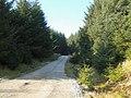 Forestry road in Coat Weggs plantation - geograph.org.uk - 699713.jpg