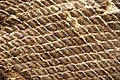 Fossilized scales 1.jpg