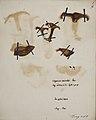 Fungi agaricus seriesI 076.jpg
