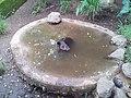 Furesa (Fundación Refugio Salvaje) Jayaque - panoramio (2).jpg
