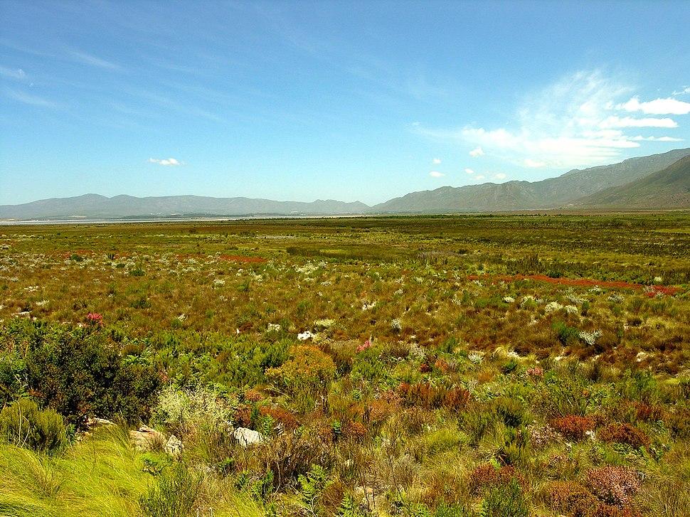 Fynbos-landscape-2