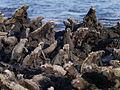 Galápagos Inseln, Ecuador (13898555832).jpg