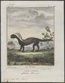 Galictis vittata - 1700-1880 - Print - Iconographia Zoologica - Special Collections University of Amsterdam - UBA01 IZ22500023.tif