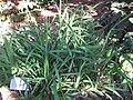 Gardenology.org-IMG 1184 rbgs10dec.jpg