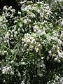 Gardenology.org-IMG 9951 rbgm10dec.jpg