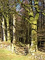 Gate and track into Heathercombe Woods - geograph.org.uk - 282131.jpg