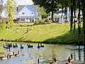 Geese attacking the new homes near Wansford - August 2013 - panoramio.jpg