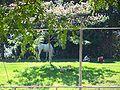 Ghi, horses range2.jpg