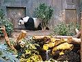 Giant Panda Habitat (7987411815).jpg