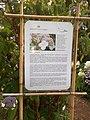 Giardino botanico di Brera (Milan 38.jpg